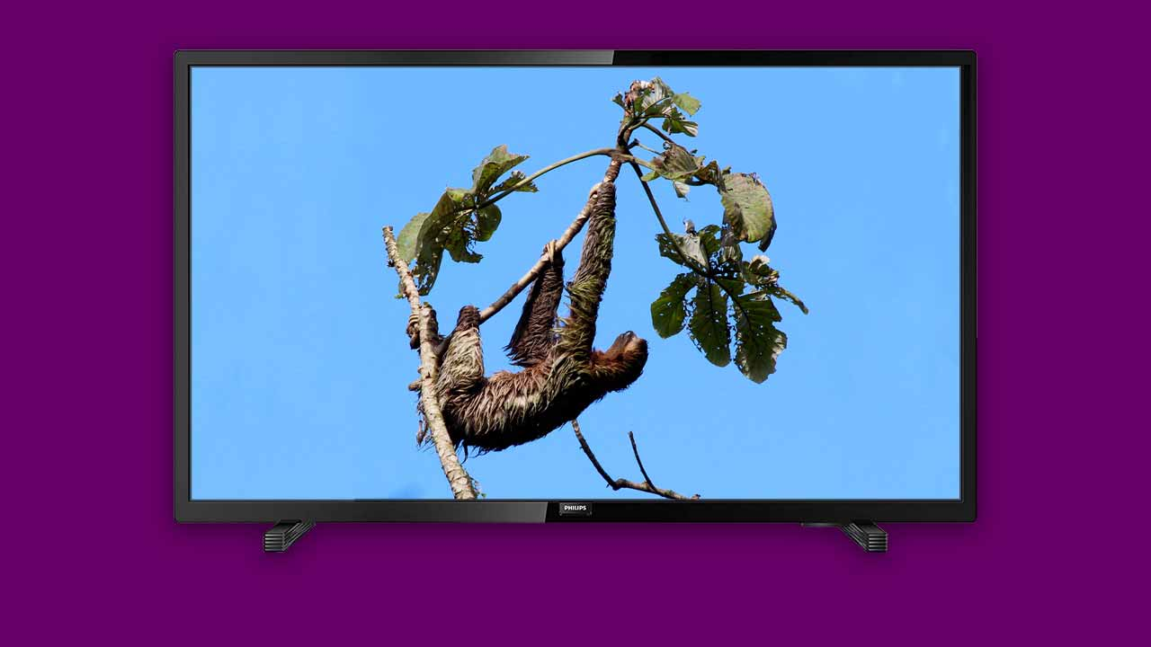 Recommended Best Buy Budget Television under £200. Philips 32-inch with Sloth bear hanging from a tree
