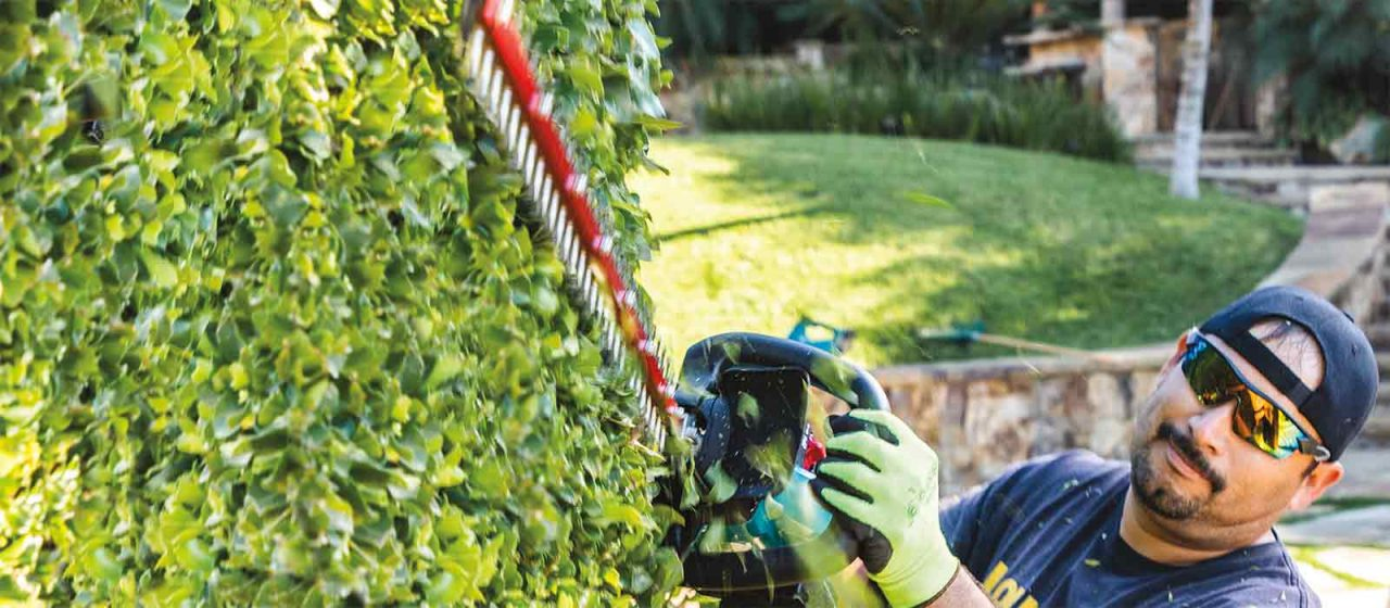 best buy Makita hedge trimmer cutting hedge by person with protective glasses and gloves
